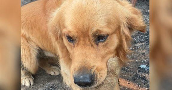 Familiens hus ble brant ned til grunnen. Så fant hunden DETTE i ruinene!