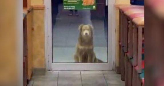 Den hjemløse hunden har besøkt restauranten i over ett år. Der får hun mat av eieren hver kveld!