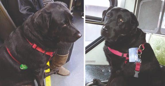 Hver dag setter hunden seg på bussen alene. Destinasjonen hennes rører tusenvis til tårer!