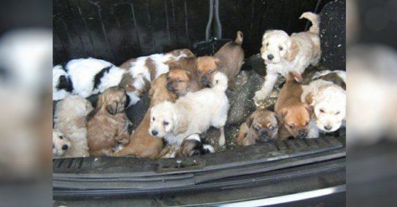 30 valper funnet i bagesjerom i Skottland. Forlatt, innelåst og vettskremt!