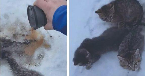 Mannen finner 3 kattunger frosset fast i bakken. Da reagerer han lynraskt med en kopp kaffe!